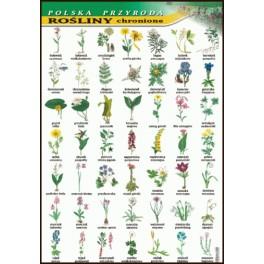 Rośliny chronione Plansza dydaktyczna