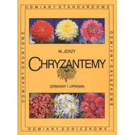 Chryzantemy Odmiany i uprawa