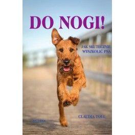 Do nogi! Jak skutecznie wyszkolić psa