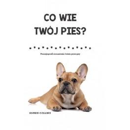 Co wie Twój pies? Poznaj sposób rozumienia świata przez psy