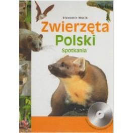 Zwierzęta Polski Spotkania