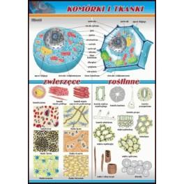 Komórki i tkanki Plansza dydaktyczna