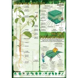 Budowa rośliny, proces fotosyntezy Plansza dydaktyczna