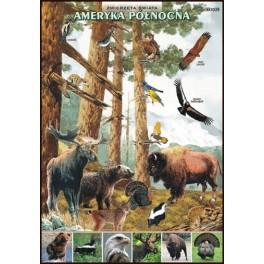 Ameryka Północna Zwierzęta świata Plansza dydaktyczna