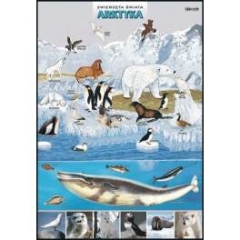 Arktyka Zwierzęta świata Plansza dydaktyczna