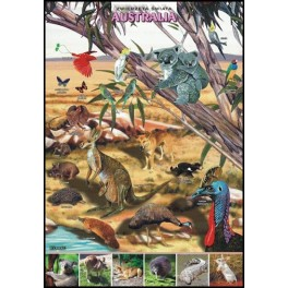 Australia Zwierzęta świata Plansza dydaktyczna