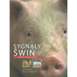 Sygnały świń Obserwuj, analizuj i działaj